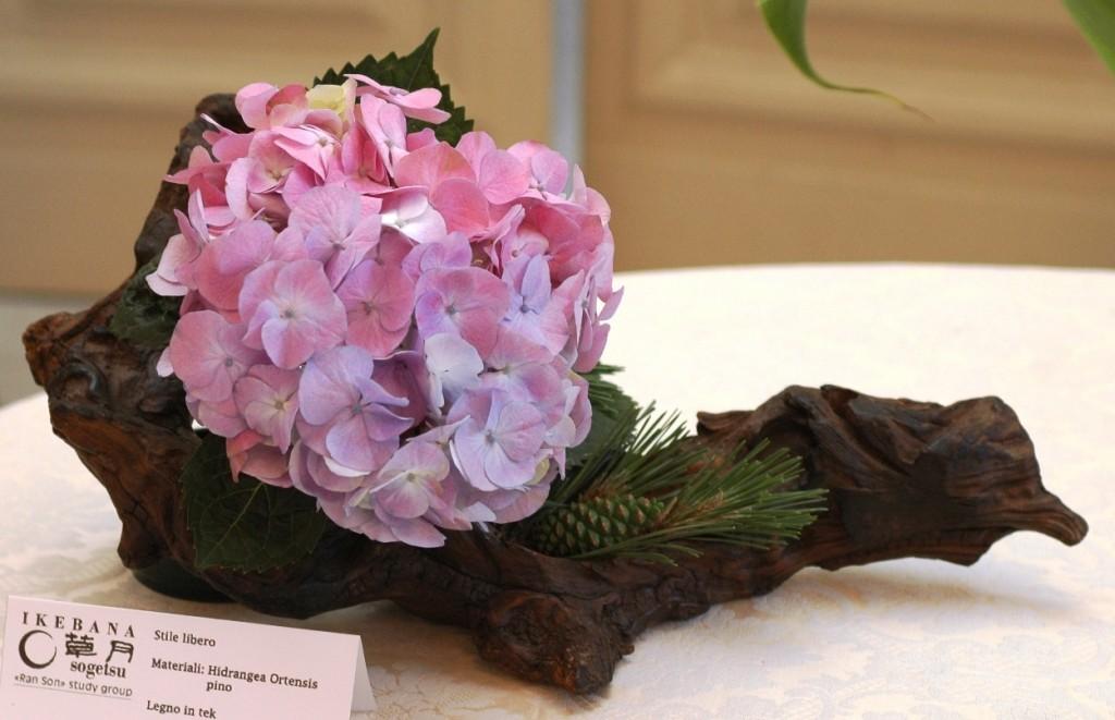 Hydrangea , Tek, Pino Ikebana Stile libero   Composizione senza contenitore