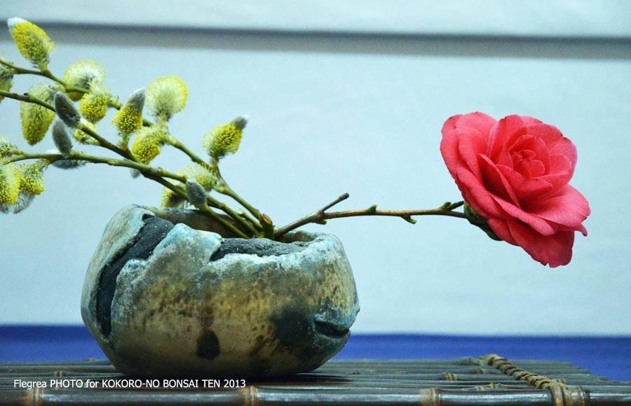 Mostra in Villa Campolieto - febbraio 2013